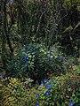 Flora de Xochicalco.jpg