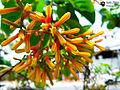 Flora v1.jpg