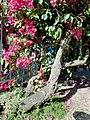 Flores - panoramio (7).jpg