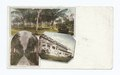 Florida-Palm Beach-Hotel Royal Poinciana-Palm Walk-Yachting (NYPL b12647398-62014).tiff