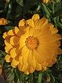 Flower1.3.jpg