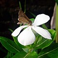Flower654321.jpg