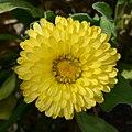 Flower April 2013-1.jpg