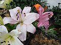Flower nursery.jpg