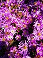 Flower photography - Photo by Giovanni Ussi 34.jpg