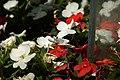 Flowers 03 IGP4320.jpg