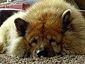 Fluffy - Flickr - Stiller Beobachter.jpg