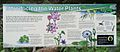 Fogg Dam signs - Woodlands to Waterlilies Walk - Introducing the Water Plants.jpg