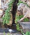 Fontana dei due leoni - particolare.jpg