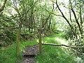 Footpath, Coed Mawr - geograph.org.uk - 839101.jpg