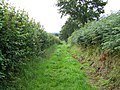 Footpath Near Spaxton - geograph.org.uk - 1436802.jpg