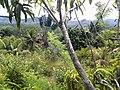 Forêt secondaire d'Andampy.jpg