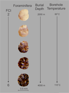 Foraminiferal Colouration Index