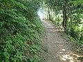 Forest Path, Ulleungdo Island - panoramio.jpg