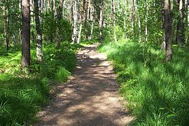 Forest bpk path cm02.jpg