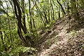 Forest in Mt.Nabeashi 06.jpg