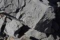 Fossils - panoramio (1).jpg