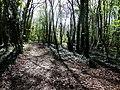 From the Wayfarer's Walk Hambledon - geograph.org.uk - 1268271.jpg