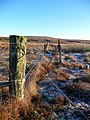 Frosty morning on Dog Hillock - geograph.org.uk - 637708.jpg