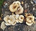 Fungi in Mikkeli.jpg