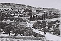 GENERAL VIEW OF THE GARDEN OF GESTHEMANE OF THE MOUNT OF OLIVES IN JERUSALEM. (COURTESY OF AMERICAN COLONY) הר הזיתים בירושלים.D826-059.jpg