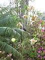 Gardenology.org-IMG 7307 qsbg11mar.jpg
