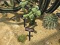 Gardenology.org-IMG 7476 qsbg11mar.jpg
