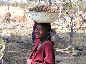Gathering food in the Okavango