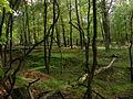 Gebied aangetast door wild in Nationaal Park de Hooge Veluwe.JPG