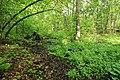 Geschützter Landschaftsbestandteil Schubertgrund in Sachsen. 2H1A0979WI.jpg