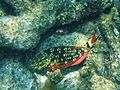 Glover's Reef 2-15 (33204834541).jpg