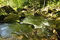 Golitha Falls (4024).jpg
