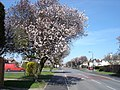 Grange Farm Avenue - geograph.org.uk - 1227487.jpg