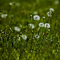 Grass (2540190314).jpg