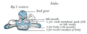 Axis (anatomy) - Wikipedia