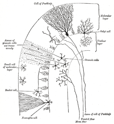 Schema formazione reticolare
