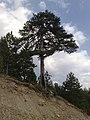 Greece - Grevena - Filippaioi - trees 01.jpg