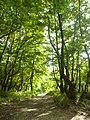 Greek nature2.jpg
