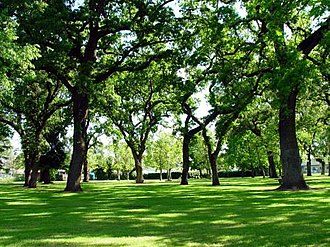 Gridley, California - Beautiful grand lawn area at Vierra Park