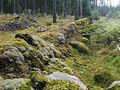 Gropavall Händenestorp-Kårholmen Trävattna sn 2923.jpg