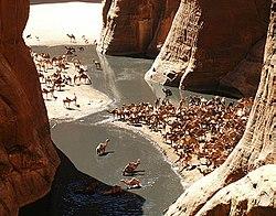 GueltaCamels.jpg