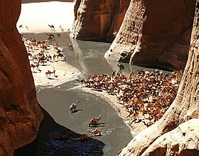 A view into a canyon: many camels gathering around a watering hole