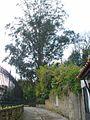 Guernica - Calle de Zearreta 1.jpg