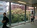 HKU MTR Station lift tower glass fence view Pokfulam Road 香港大學 May 2017 Lnv2 01.jpg