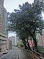 HK 北角半山 North Point Mid-Levels 雲景道 69-75 Cloud View Road 摩天大廈 Skycraper sidewalk trees Apr-2014 Beverley Heights.JPG