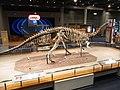 HK TST Science Museum bones exhibit 203 恐龍 dinosaur Sept-2012.JPG
