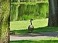 Hamm, Germany - panoramio (5034).jpg