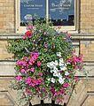 Hanging basket, York (29445662381).jpg