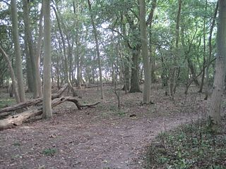 Hardwick Wood nature reserve in the United Kingdom