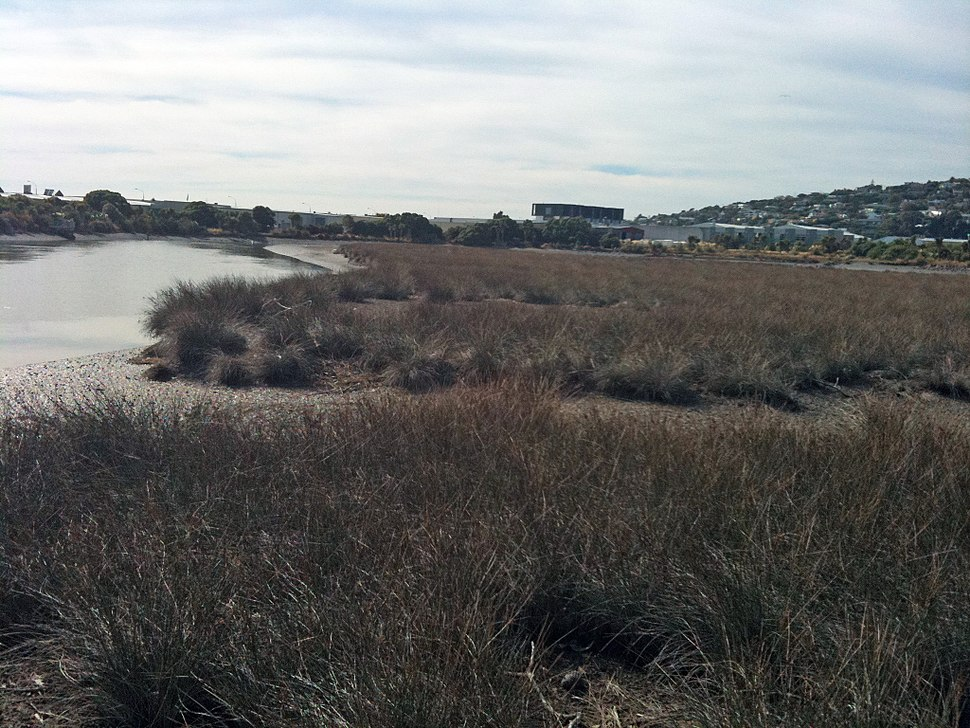 HeathcoteRiverEstuarySaltmarsh